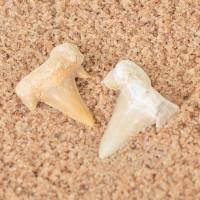 Žraločí zuby
